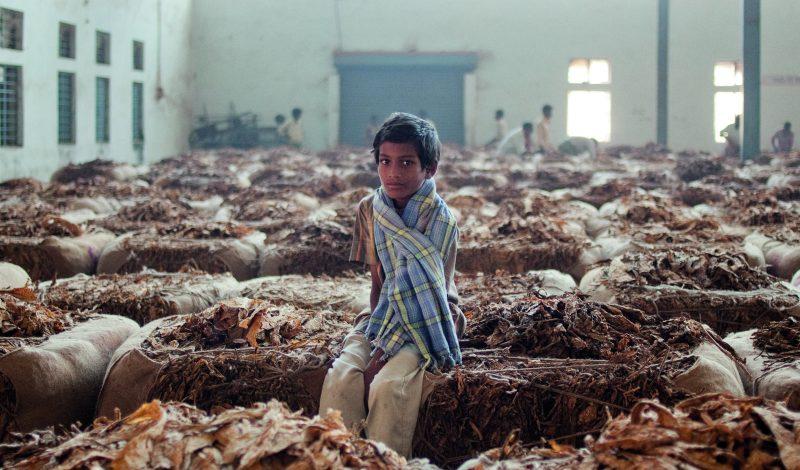 Periyapatna, India A farmer's child sitting on a tobacco bale
